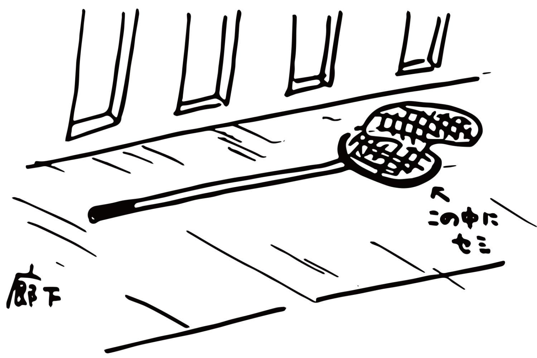 虫取り網で蝉捕獲