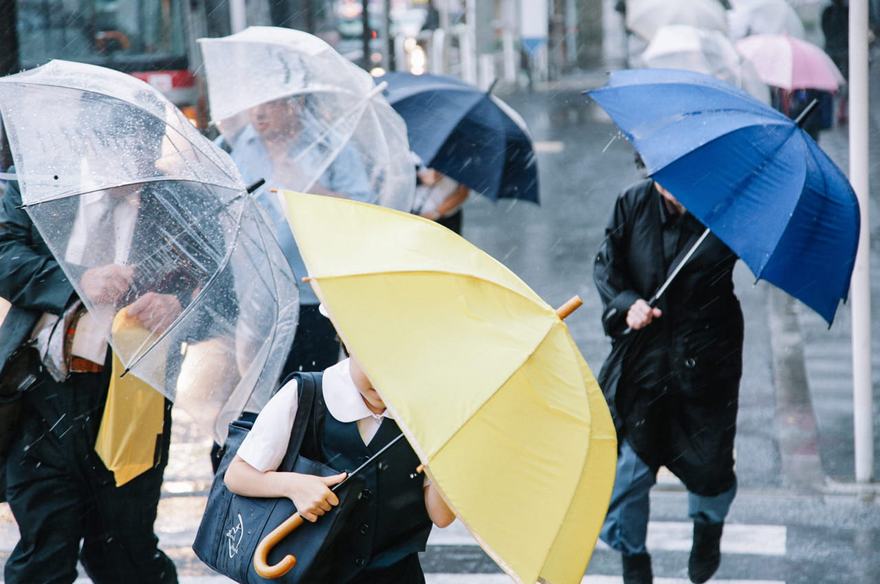 セミ(蝉)は傘を使って完全防御!